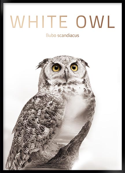 Poster - Owl