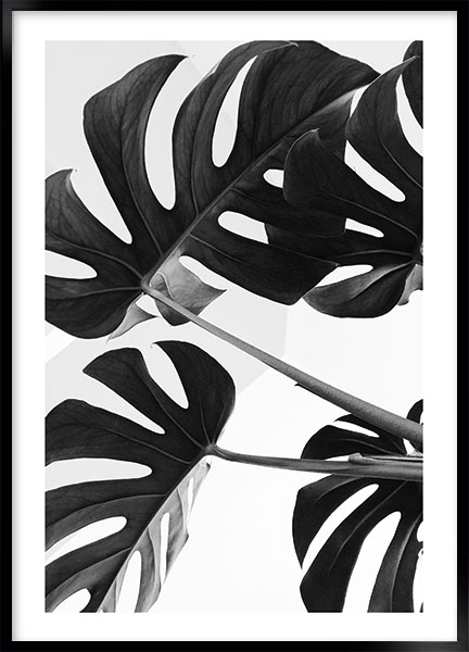 Poster Monstera - Black-white