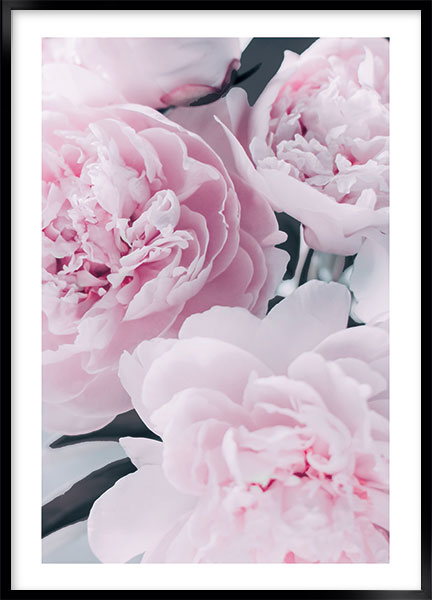 Poster Peony pink no3 - Flowers