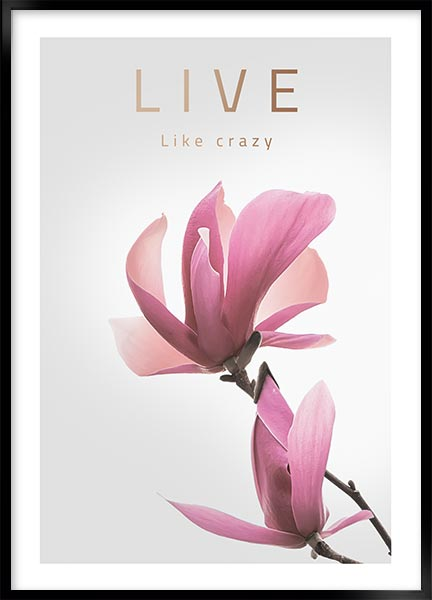 Poster - Live